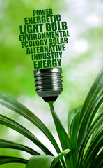 Bulb made with words on plant. Concept of green energy.