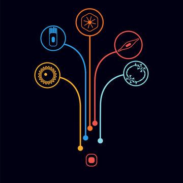 human cell type set
