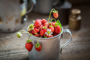 Ripe wild strawberries in the old metal mug