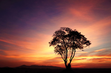 Silhouette Big Tree and Mountain Landscape with Colorful Sky Sunset