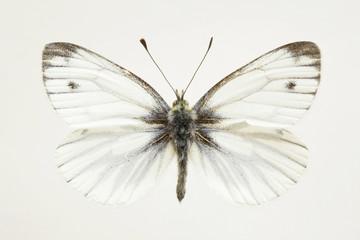 Studio shot of grey moth