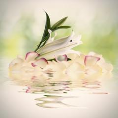 płatki kwiatów spa i wody