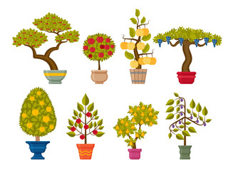 Bonsai tree set. Decorative plants in flower pots. Vector illustration.