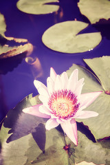 Color toned picture of a lotus flower, selective focus.