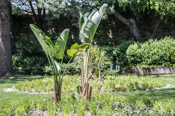 Bananenpflanzen und Palmen im Schlossgarten Siegen