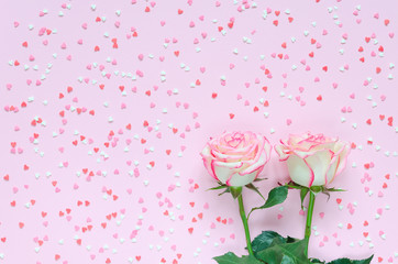 Two pink blooming rose flower on pink background colorful hearts