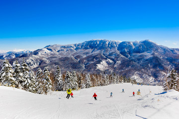 Mountain ski resort Shiga Kogen, Japan - nature and sport background, sunny day, snow pine trees