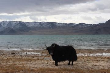 Mongolian autumn landscape
