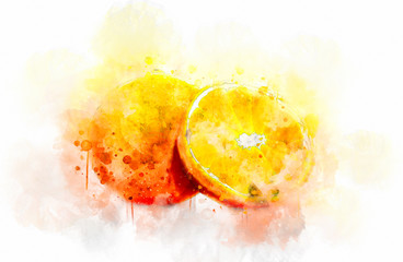 Watercolor Illustration Oranges