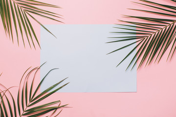 Palm leaves on a pink background with blue card. Minimal and flat lay.
