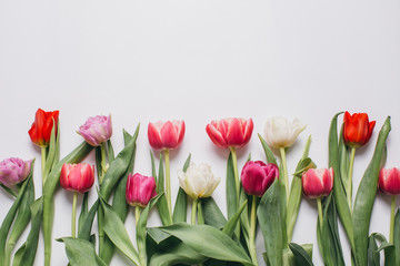 Fresh tulips on a white table, top view.