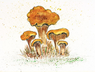 Watercolor drawing mushrooms chanterelles on the grass isolated on white background. Watercolor painting.