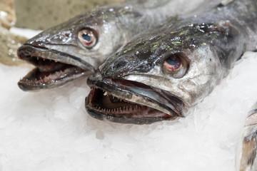 Fish at the market sea fish
