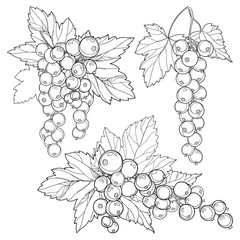 Vector set with outline Red currant bunch, berry and leaves in black isolated on white background. Floral elements with redcurrant fruits in contour style for summer design and coloring book.