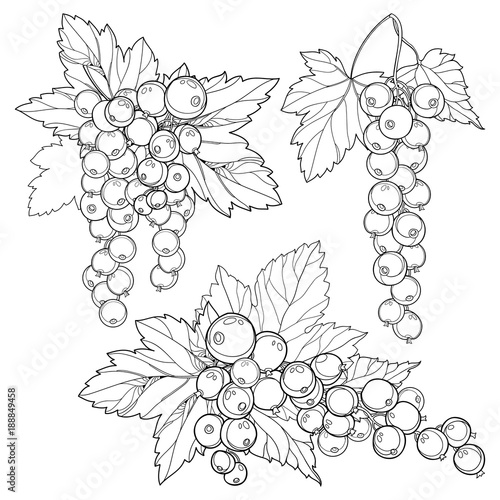 Vector Set With Outline Red Currant Bunch Berry And Leaves In Black Isolated On White