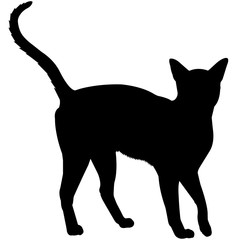 Abyssinian Cat Silhouette Vector Graphics