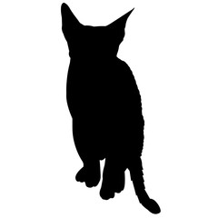 Cornish Rex Cat Silhouette Vector Graphics