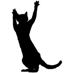 Devon Rex Cat Silhouette Vector Graphics