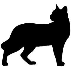 Siamese Cat Silhouette Vector Graphics
