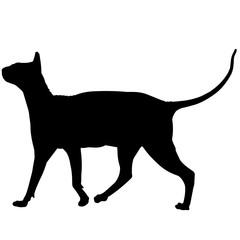 Sphynx Cat Silhouette Vector Graphics