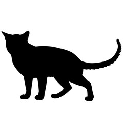 Tonkinese Cat Silhouette Vector Graphics