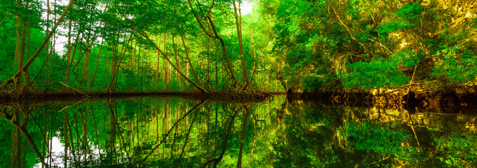 mangrove green trees reflected in water