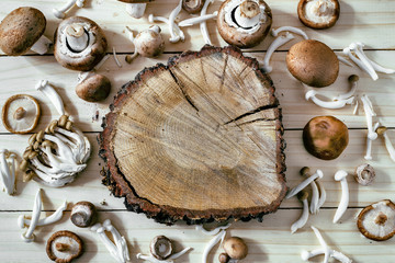 Different kinds of edible mushrooms on wooden table (White Shimeji, Brown Shimeji, shiitake and poplar mushroom) oak trunk in center, top view, copy space.