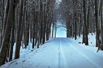 forest winter tunnel