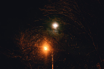 tree branches, night, moon, lantern