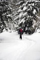 Con le ciaspole, tra i boschi di pini ricoperti di neve