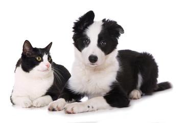 Hund und Katze isoliert auf weiß