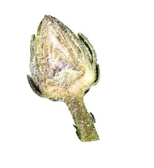 Artichoke half dusted with salt on white background