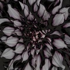 Close up of solarized dahlia flower