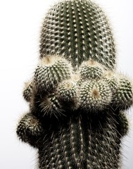 Close-up of cactus with needles