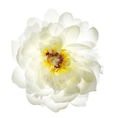Close-up white flower on white background