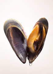 Open mussel in shell with water drop