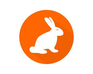 orange rabbit hare rabbit fauna image
