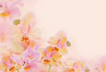 orchids on yellow background