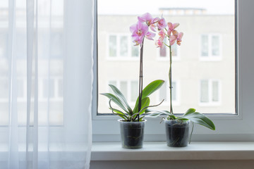 beautiful orchids on windowsill