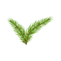spruce branches check mark