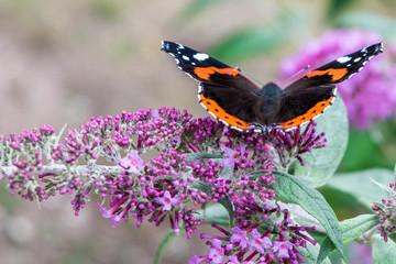 Motyli odpoczywać na kwiacie