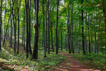 Path in autumn forest. Natural background