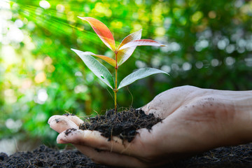 Close up human hand is planting the plant to the ground with lay of sunlight