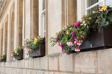 The beauty of window boxes