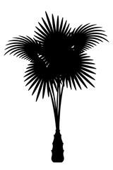 palm tree black outline silhouette stock vector illustration