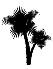 palm tree black outline silhouette stock vector illustration