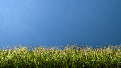 Grass Meadow Against Blue Wall