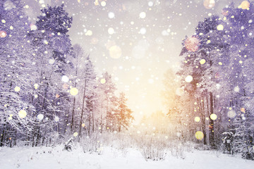 Winter sunrise in snowy forest with shining snowflakes on sun. Winter nature background.