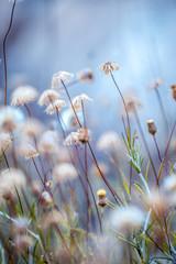 dry plants nature