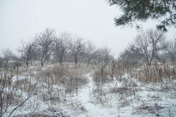 Keuken foto achterwand Bos in mist forest